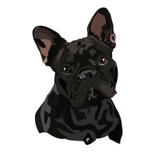 French Bulldog. Vector Illustr...