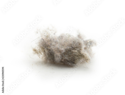 Foto Common house hold dust, high magnification macro, isolated on white