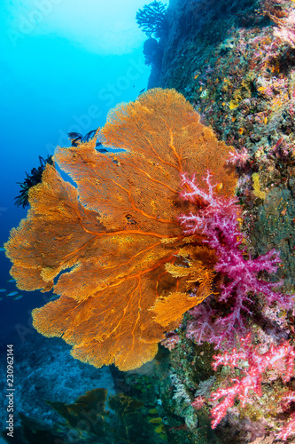 Fotografiet Tropical fish and colorful corals on a healthy tropical coral reef