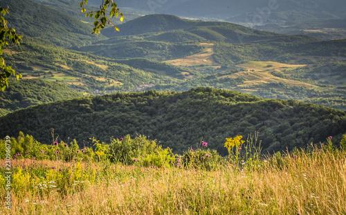 Fotobehang Honing Summer Carpathians