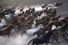 Wild Horses Group Running On T...