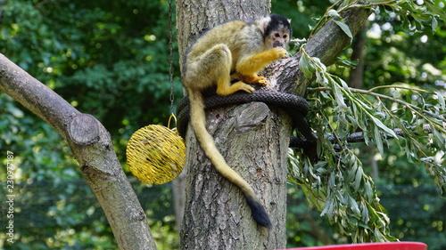 Foto op Plexiglas Aap The monkey is sitting on a rope