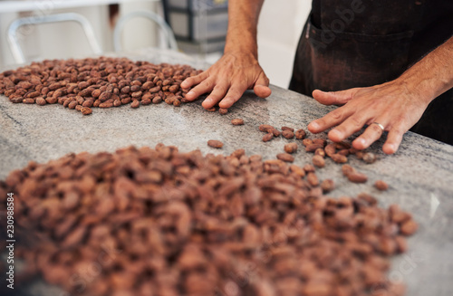 Fotografía  Chocolate making factory worker hand sorting cocoa beans