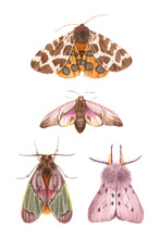 Watercolor Illustrations Insects - Moths. Hand Painting, Isolated Elements.