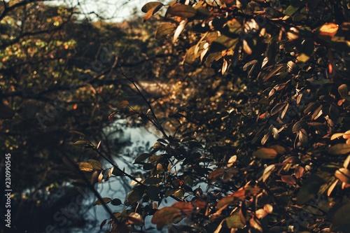 Fotografía  natura