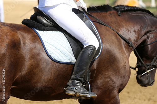 Poster Equitation Beautiful sport horse with rider under saddle on natural background, equestrian sport