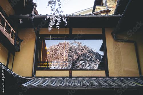 窓に反射する桜
