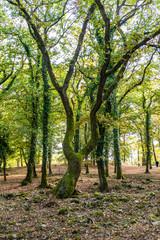 Arbre couvert de mousse  en forêt sous une lumière d'automne