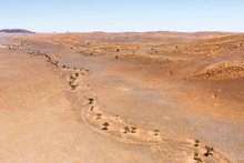 Aerial View, Tree Line Along Dried Out Riverbed, Foothills Of The Namib Desert, Namib-Naukluft National Park, Namibia, Africa