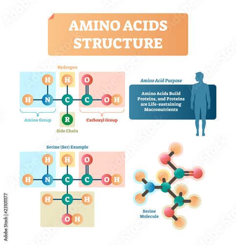 Amino acids structure vector illustration Canvas Print
