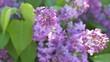 Summer flowers, close up