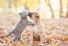 Mongrel Puppy Kisses A Kitten On Autumn Leaves