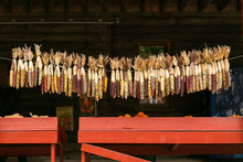 Hanging Dried Indian Corn At L...