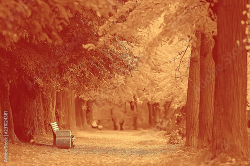Keuken foto achterwand Rood traf. autumn landscape / yellow trees in autumn park, bright orange forest