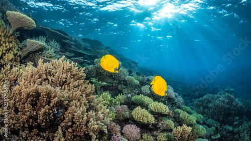 Korallenriff im Roten Meer, Ägypten