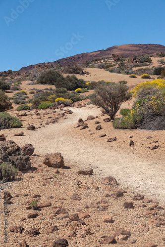In de dag Zalm Path through the Montana de los Tomillos, at the foot of the Teide volcano, Tenerife, Canary Islands, Spain