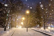 Winter Night Park. Christmas B...