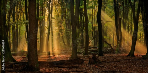 Sunlight shining through autumn trees in the forest on a foggy morning