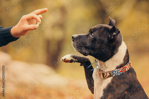 Fototapeta dog with a reward obraz