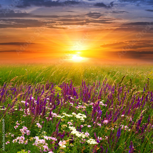 In de dag Weide, Moeras Summer landscape with sunset in steppe