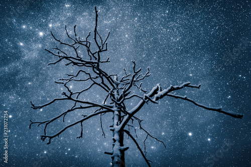 A snow covered tree underneath the stars at night
