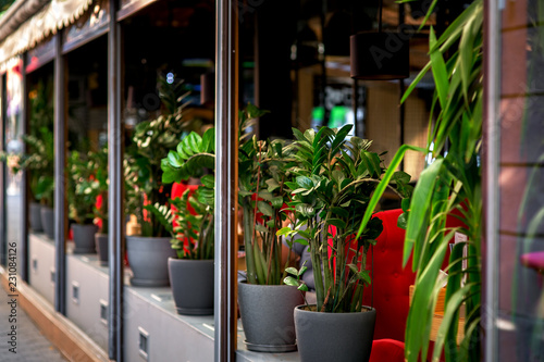 Foto  outdoor cafe decorated with flowerpots with flowers, summer terrace in dark colors with green plants
