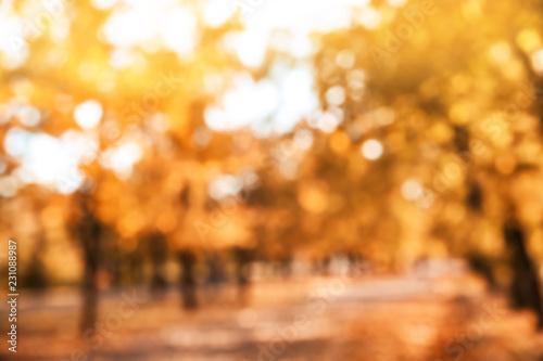 Montage in der Fensternische Honig Blurred view of trees with bright leaves in park. Autumn landscape