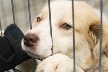 Shelter Dogs Begging To Be Adopted