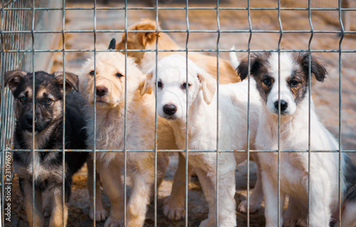Photo  Shelter dogs begging to be adopted