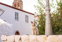 A Beautiful Wild, Stray Kitten...