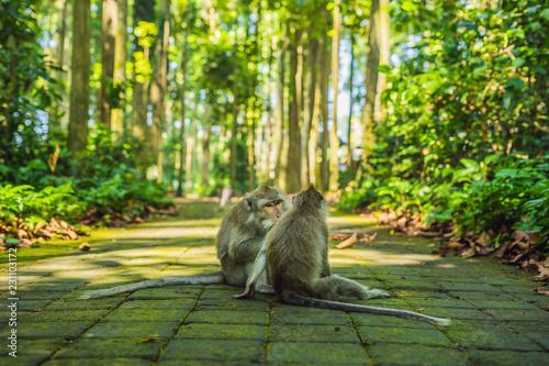 Foto op Plexiglas Aap Monkeys in Ubud Monkey Forest, Bali, Indonesia