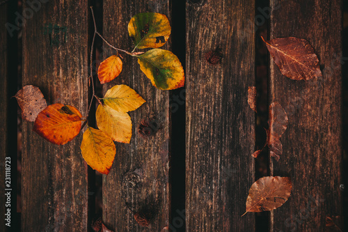 Dead leaves on the bench. Fall and autumn background Slika na platnu