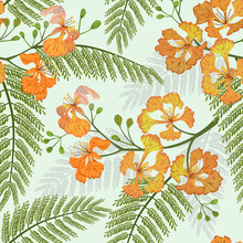 The Mexican Bird Of Paradise, Or  Peacock Flower Seamless Pattern.