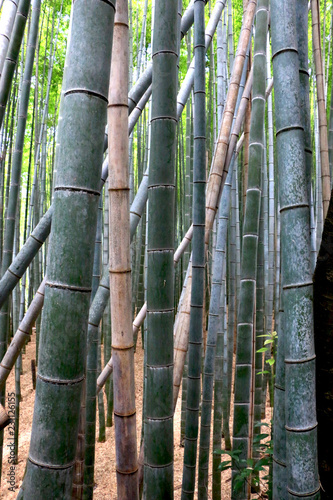 Spoed Foto op Canvas Bamboo Arashiyama bamboo forest, Kyoto-Japan