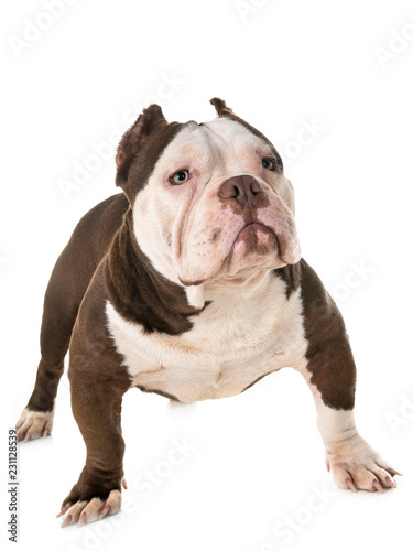 Poster Countryside male american bully