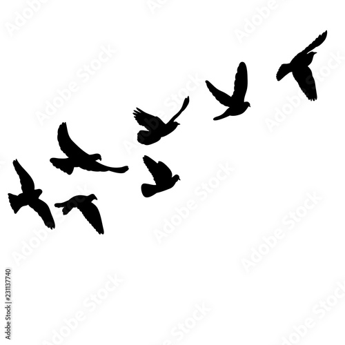 isolated set of flying birds silhouettes Tableau sur Toile