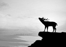 Silhouette   Deer On Meadow During Sunrise. Oil Painting
