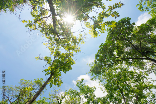 Fotografie, Obraz  Green leaves frame with sky background and copy space for text