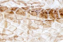 Dry Skin Of Snake On White Background, Macro Photo. Shedding Snake Skin Closeup. Reptile Scale Pattern.