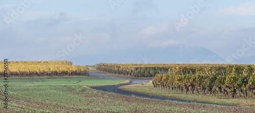 Obraz na plátně Route entre vignes et champs en automne dans le Genevois