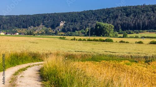 Fotobehang Honing Beautiful view near Kipfenberg-Bavaria-Germany