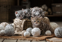 Small Striped Kitten In The Old Basket