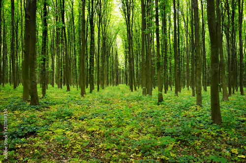 forest green #231169334