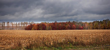 Autumn Field And Forest In Rai...