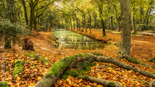 In de dag Herfst Autumn forest landscape scene rich in color