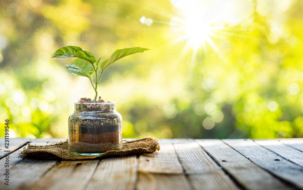 Fototapety, obrazy: Plant growing on organic fertiliser stack inside glass with sunlight and warm environment