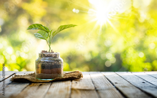 Fototapeta Plant growing on organic fertiliser stack inside glass with sunlight and warm environment obraz