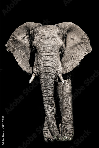 Door stickers Elephant african elephant