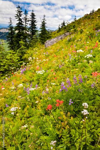 Fotografie, Obraz  Beautiful wildflowers blooming along the hillside in Washington state, USA