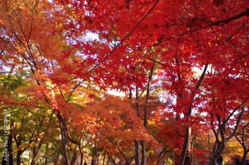 Keuken foto achterwand Rood paars 紅葉